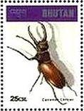 ヨーロッパミヤマクワガタ(Lucanus cervus、ブータン)